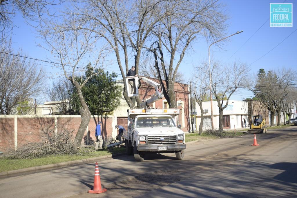 Prosiguen los trabajos de poda correctiva por parte del Municipio