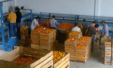 El impulso al desarrollo productivo y comercial del sector citrícola