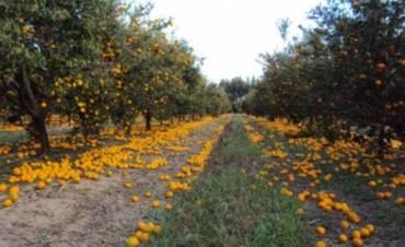 La provincia anunció una línea de crédito blando para citricultores