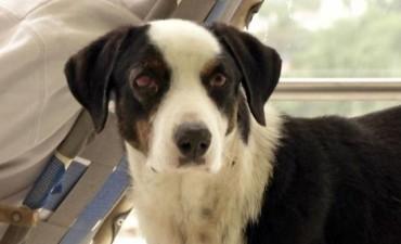La conmovedora historia de Pirata, el perro que murió esperando a su dueño fallecido