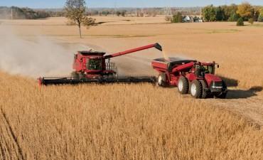 Suba del dólar: Productores de soja ganaron casi $15.000 millones en un mes