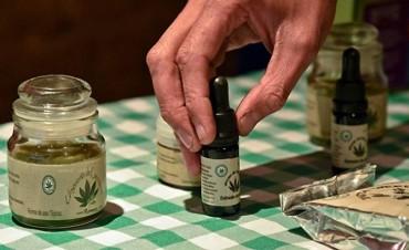 Piden que el Congreso reglamente la Ley de Cannabis Medicinal