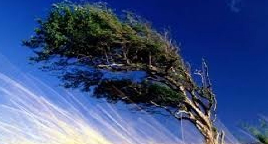 Alerta para Entre Ríos por vientos con ráfagas que pueden alcanzar los 85 km/h