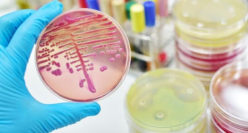 Un nuevo antibiótico para infecciones graves ya llegó al país