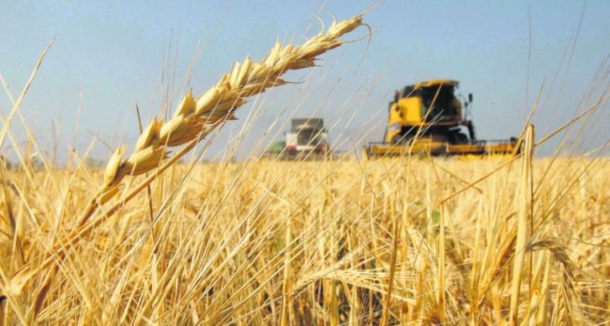 Por las inclemencias climáticas, cayó un 45% la cosecha de granos en Entre Ríos