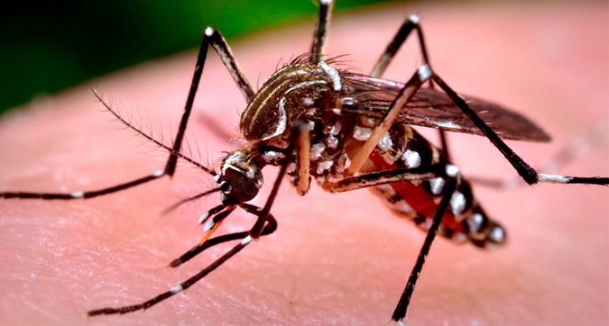 Alertan sobre un nuevo ciclo epidémico de dengue