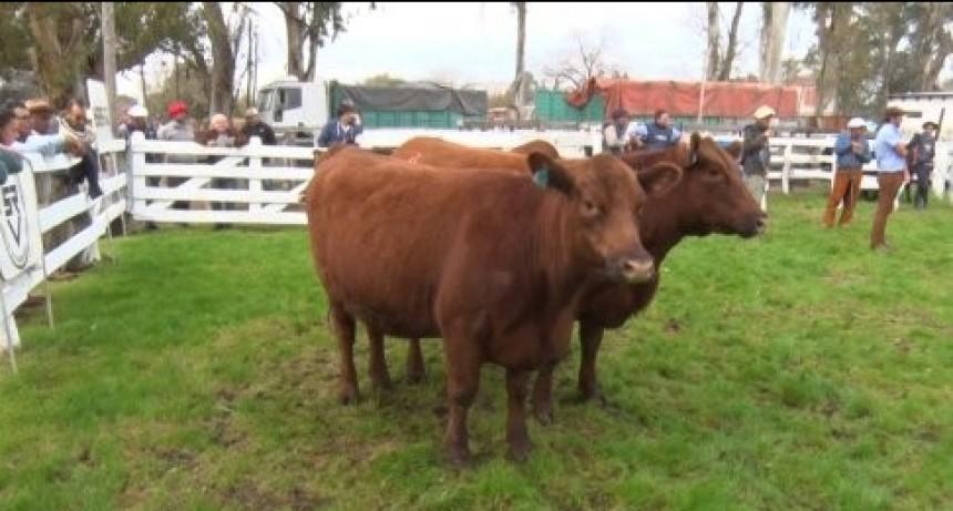 Exposiciones Rurales en Entre Ríos. Este sábado comienza el calendario en la Sociedad Rural de Villaguay