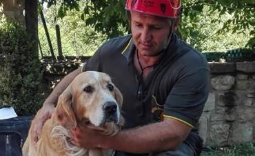La conmovedora historia del perro que sobrevivió 10 días bajo los escombros