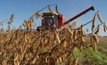 Clima y política golpearon a la cosecha entrerriana que cayó un 29.5%