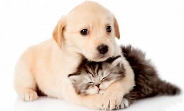 Se reanuda el Programa de Castración de Mascotas  a partir de Octubre