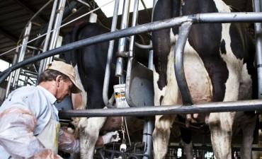 La producción láctea se redujo casi 11,8% en dos años