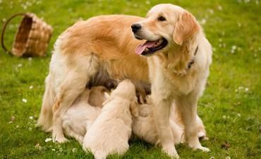 Entrega de bonos para la castración de caninos y felinos