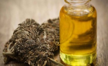 Se reglamentó la ley que regula el uso y la investigación del cannabis medicinal