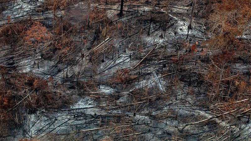 En agosto se quemaron 2 millones y medio de hectáreas en el Amazonas