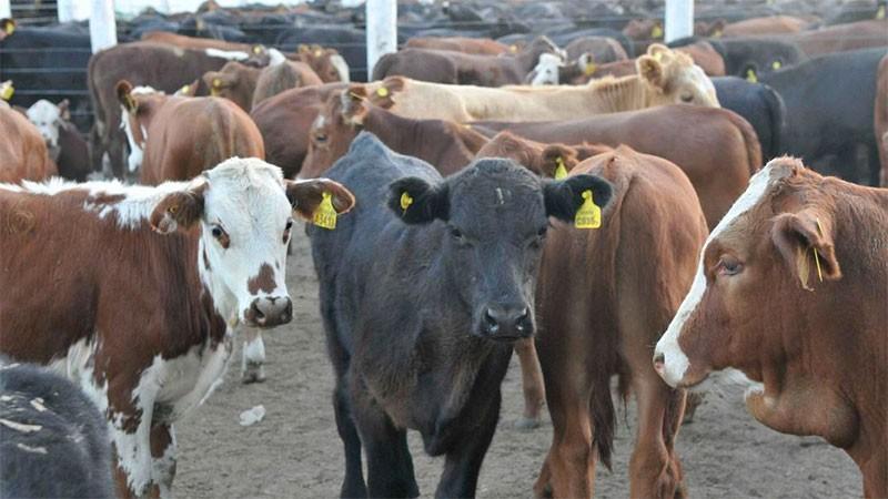 Entre Ríos se encuentra entre las provincias argentinas con mayor stock bovino