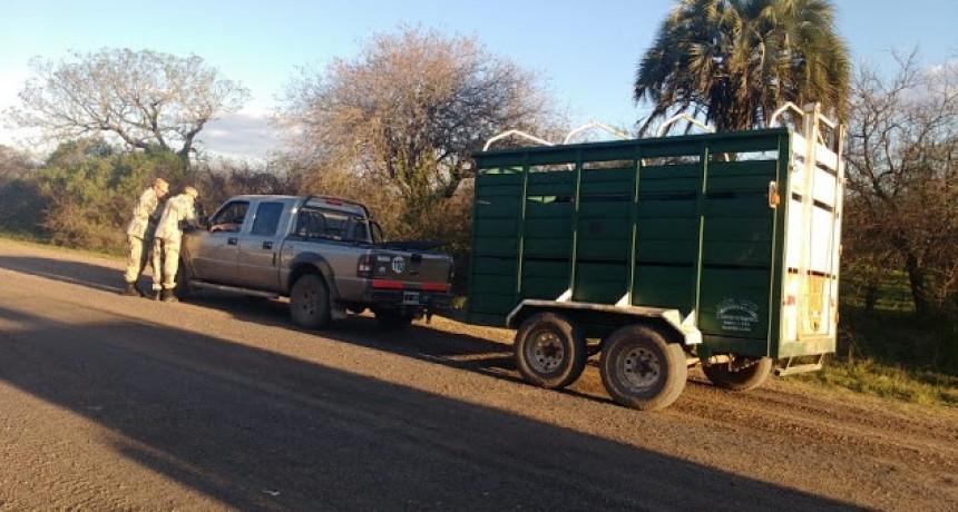 Traslado de ganado sin certificado de guía y trailer sin habilitación.