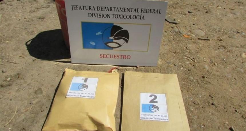 Procedieron al formal secuestro de dos plantas de cannabis sativa en Barrio Salto