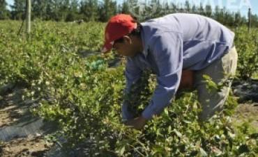 En Concordia hallaron trabajadores irregulares en el Arándano