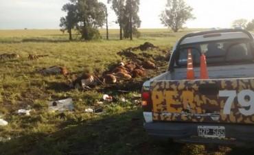 Accidente de un Camión Jaula con pérdidas de animales vacunos