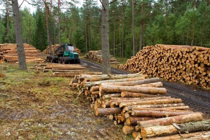 Vender madera a Uruguay no tendrá alto impacto económico