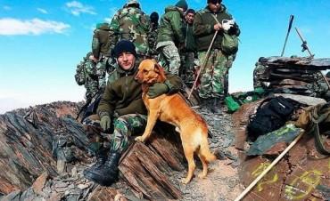 De Cabo a Sargento: un perro del Ejército fue ascendido