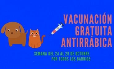 Este lunes comienza la campaña de vacunacion antirrábica