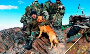 La historia del perro del Ejército que fue ascendido de Cabo a Sargento