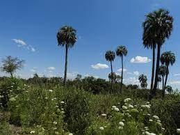 Reconocimiento y relevamiento de especies dentro del futuro Parque Nacional Selva de Montiel