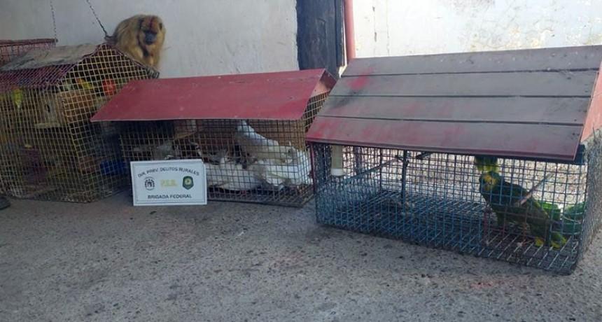 Hallaron un mono carayá y gran cantidad de pájaros en cautiverio