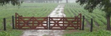 Pronostican un verano con lluvias superior a lo normal