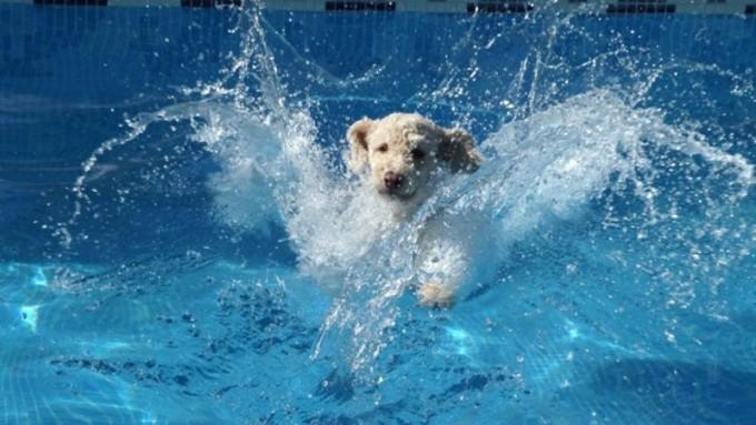 Consejos para mantener a tu mascota fresca y saludable durante el verano