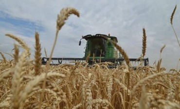 Aumentó 41 por ciento la superficie sembrada con trigo en Entre Ríos