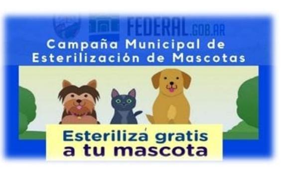 Continua la campaña municipal de castración