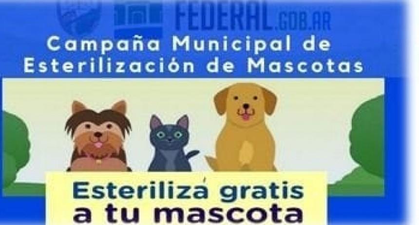 Se reanuda la campaña municipal de castración de mascotas
