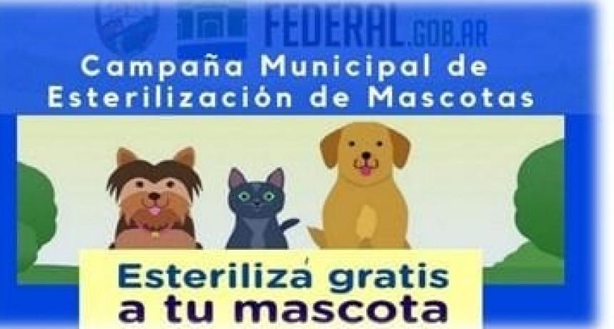 Campaña municipal de castración