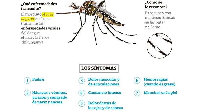 Claves de la campaña contra el dengue: Qué síntomas lo diferencian del Covid-19