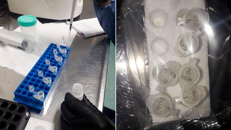 Reportaron 312 casos de coronavirus en catorce departamentos: Federal suma dos mas