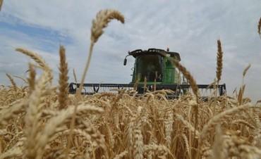 Crece el cultivo de trigo y el promedio nacional sería histórico