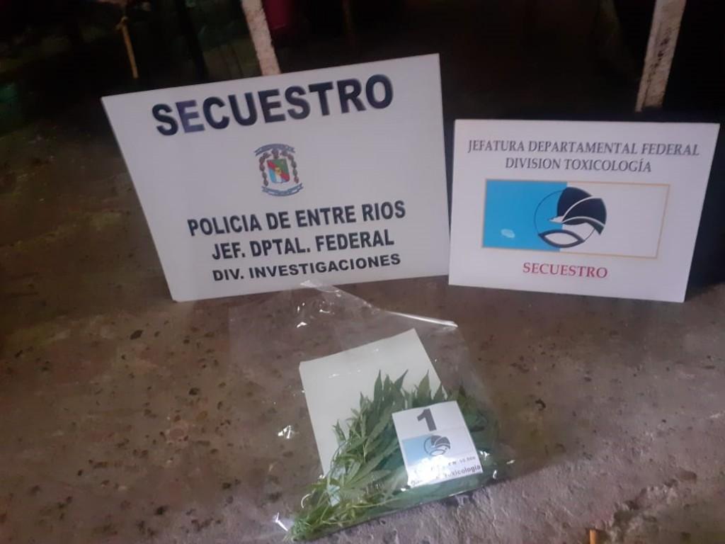 Secuestran plantas de marihuana en Barrio Salto