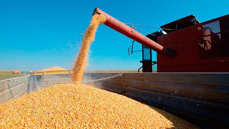 El Gobierno cerró exportaciones de maíz para priorizar al mercado interno